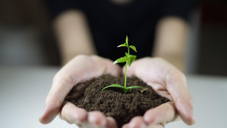 Descontaminación del suelo y su importancia para el territorio